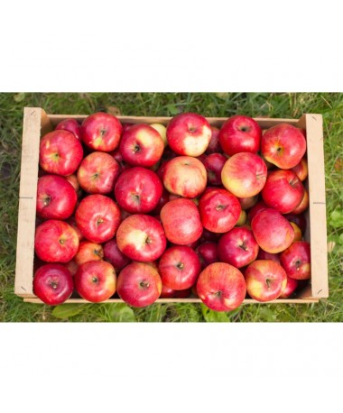 Apples (case)