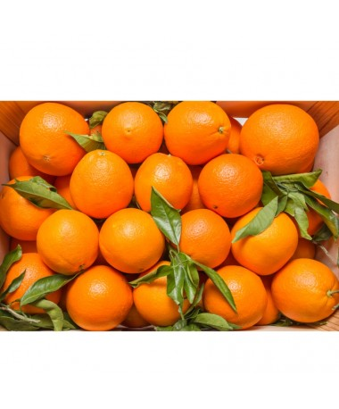 Clementines (case)
