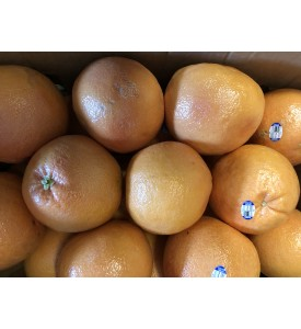 Grapefruit organic (case)