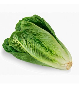 Lettuce romaine - case