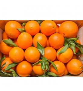 Oranges (case)