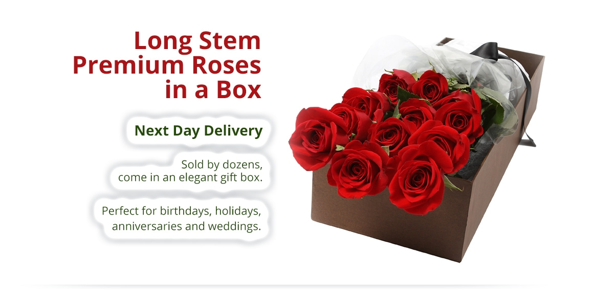 Premium Roses in a Box - Next Day Delivery